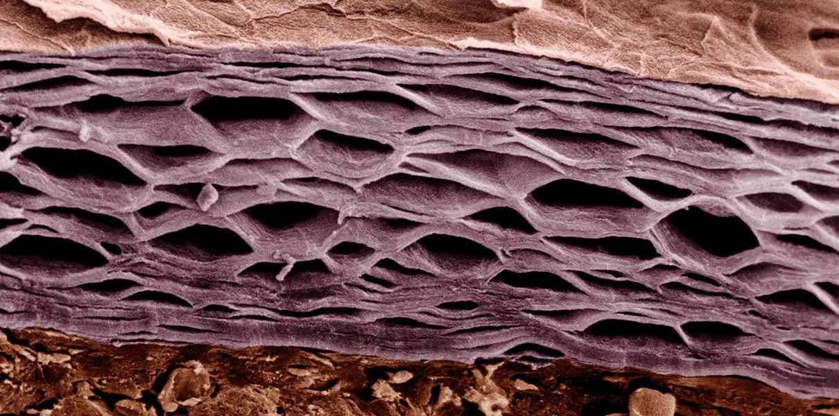 уже никто кожа лица под микроскопом фото зависимости