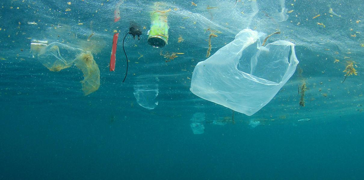 Картинки по запросу организмы едят пластик