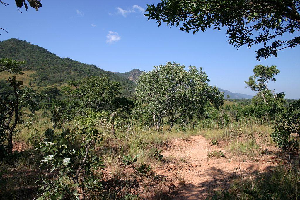 Редколесья с деревьями Миомбо оказались на грани вымирания в Танзании из-за изменений климата.