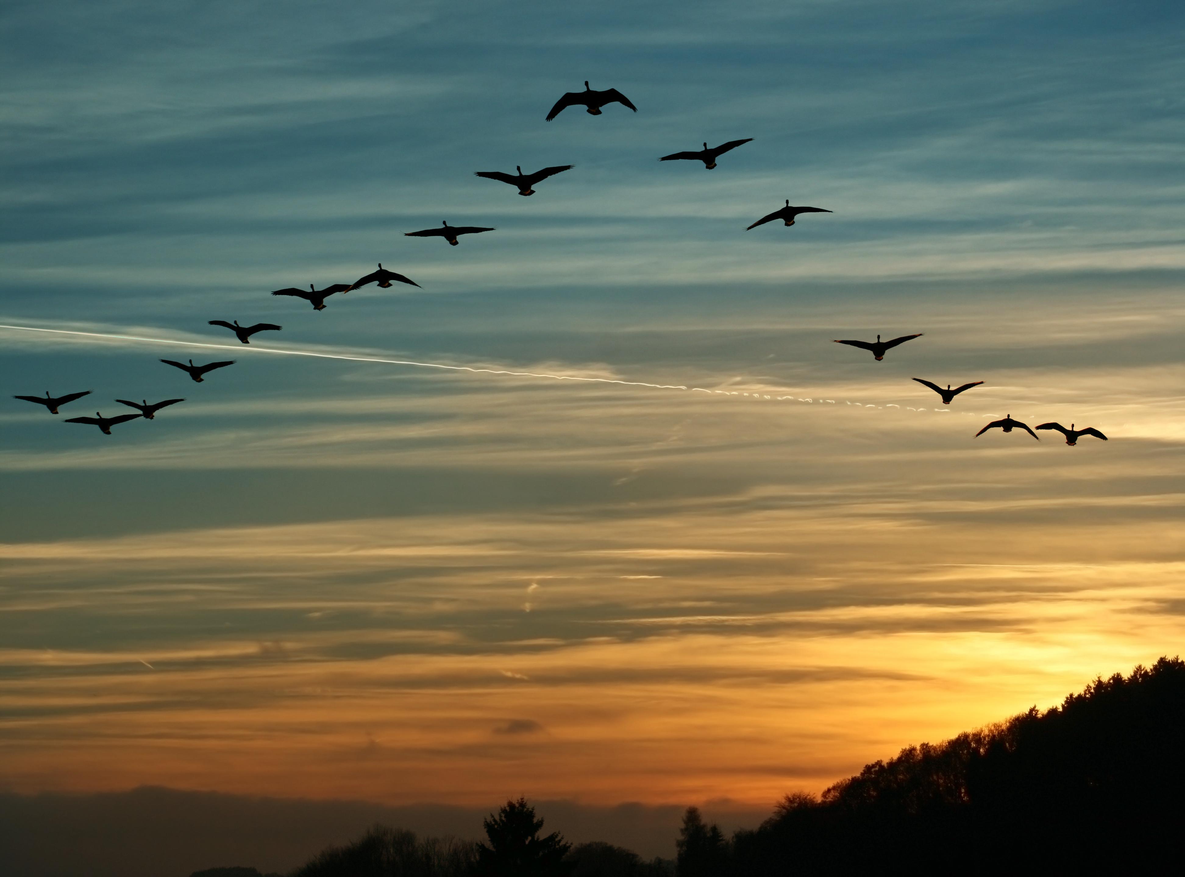 картинки журавли в осеннем небе решил поделиться