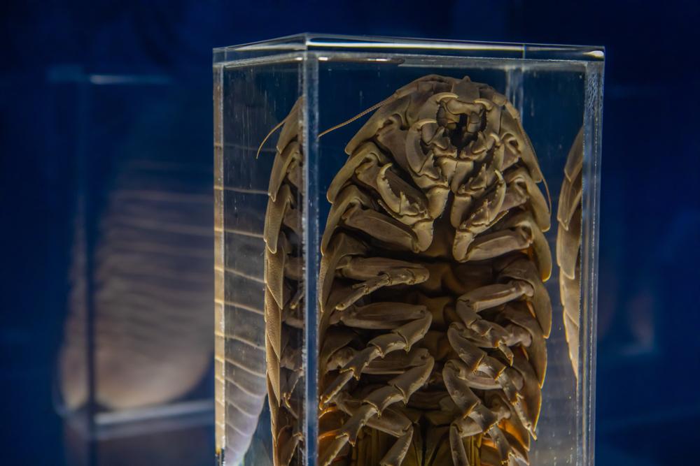 bc2f42d9247a2 Посмотрите, как гигантские мокрицы едят мертвого аллигатора. Так ученые  пытаются реконструировать Пермский период