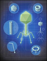 Что такое синтетическая биология, в которой ученые программируют код живых существ
