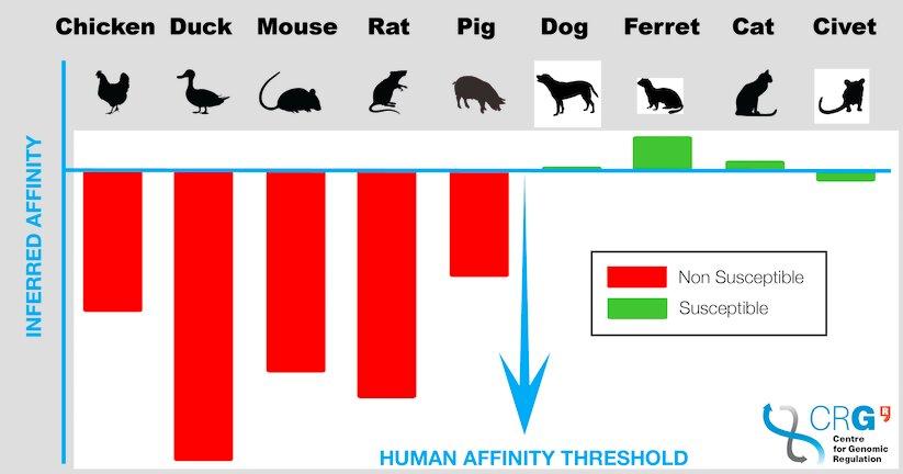 З'ясувалося, для яких тварин коронавірус найнебезпечніше
