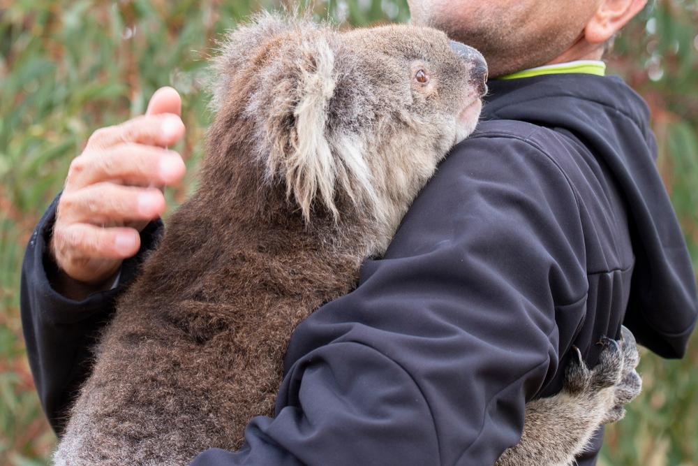 3 млрд тварин загинуло і постраждало від пожеж в Австралії