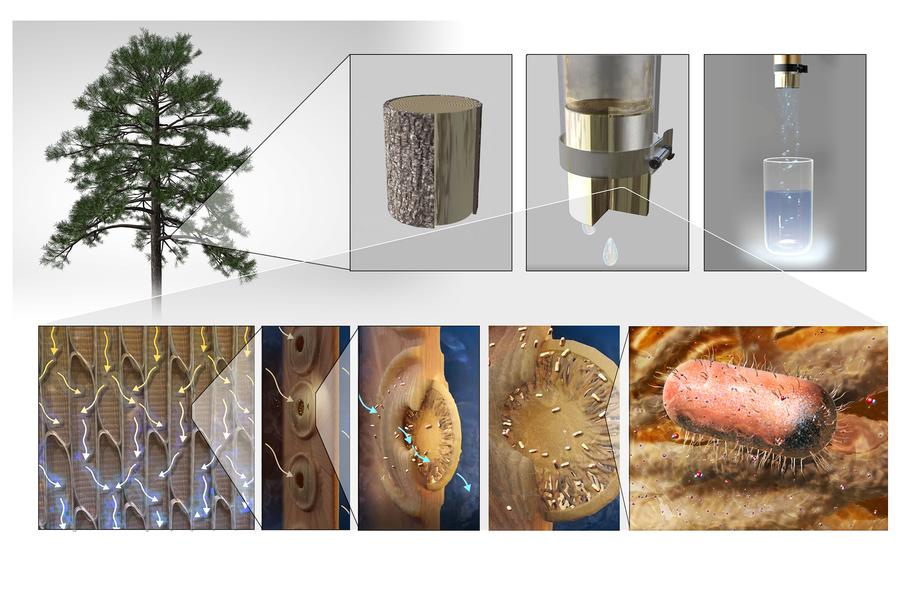 У MIT створили деревні фільтри для питної води, які нейтралізують патогени