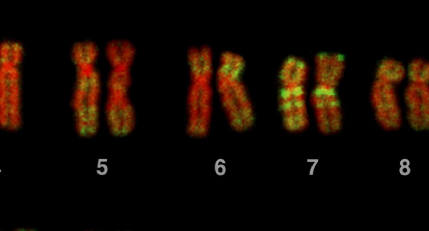 экрана 2021 04 05 в 16.43.21 Исследователи научились собирать ДНК из воздуха