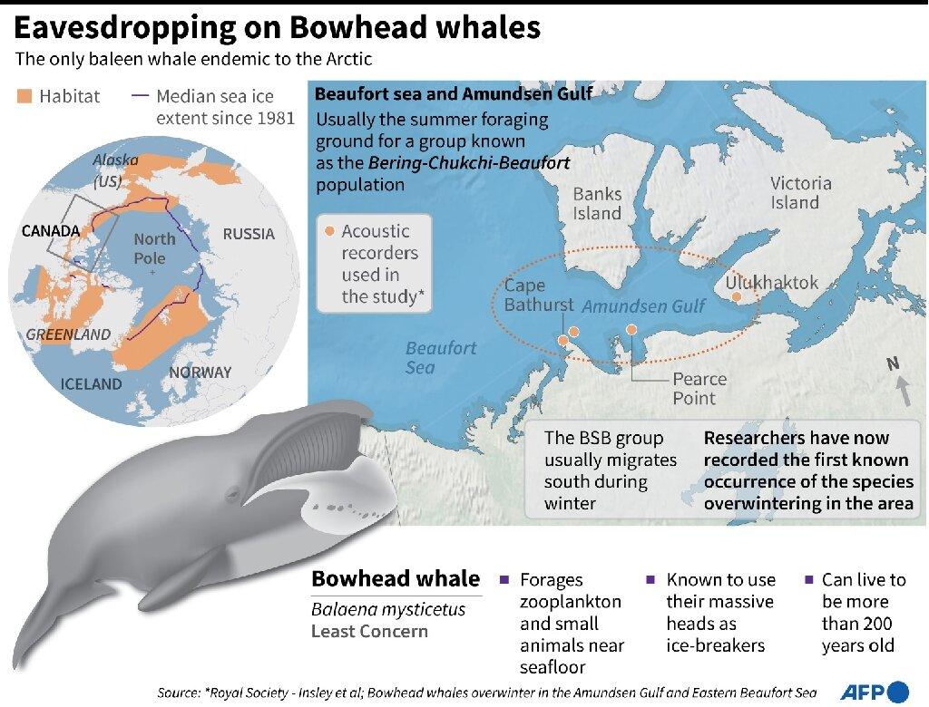 Пісні китів розповіли, що тварини пропустили міграцію на південь через зміни клімату