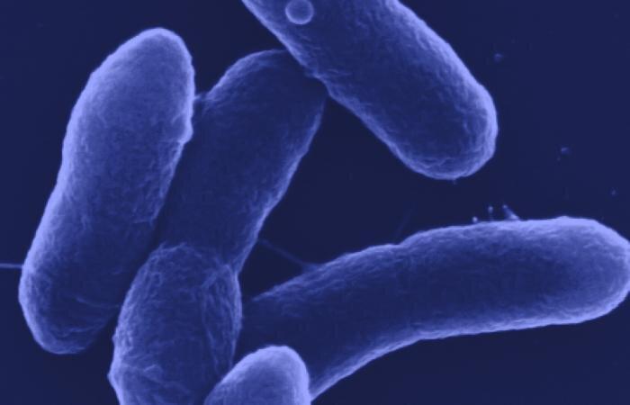 Бактерія перетворює паперові відходи в цінне хімічна речовина