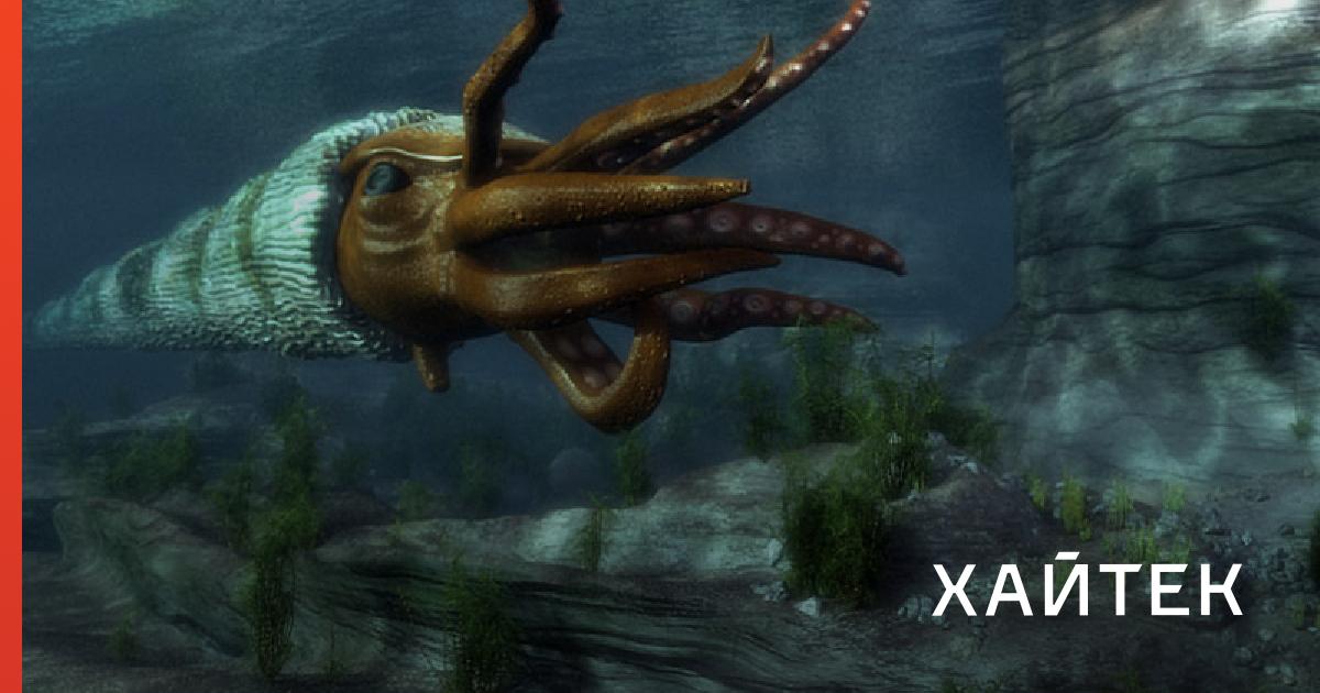 0e3308306420de4dfc11e3e0c45cf467 fb Останки вымершего моллюска-убийцы случайно обнаружили в хранилище музея